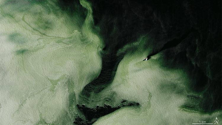 La Antártida se vuelve verde