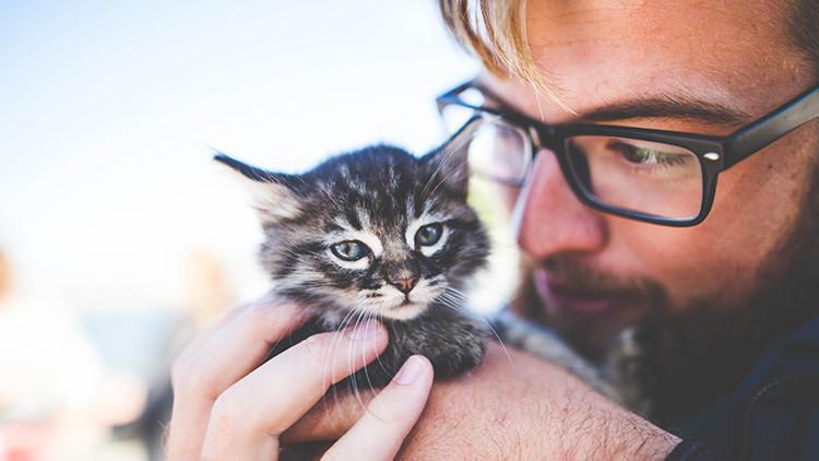 Oferta de empleo: en Irlanda necesitan cubrir la plaza de 'abrazador' de gatos
