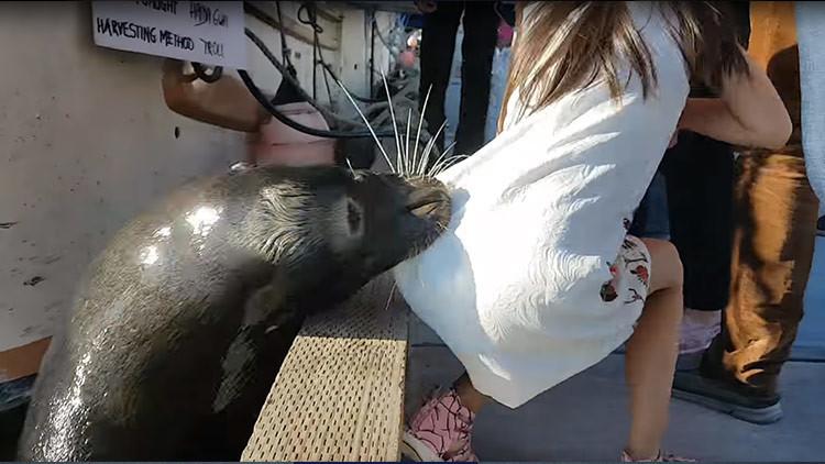 La niña atacada por un lobo marino podría tener una infección mortal (VIDEO)