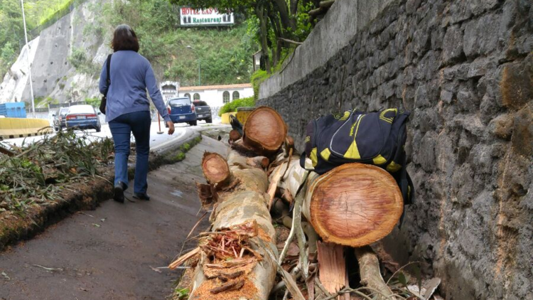 El mundo al revés: en Venezuela cortan árboles para 'protestar'