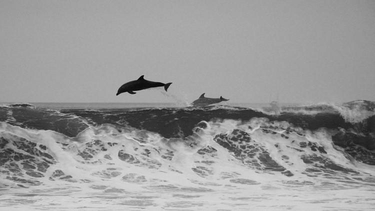 IMPACTANTES IMÁGENES: Jóvenes irlandeses bailan con un delfín muerto y lo tiran