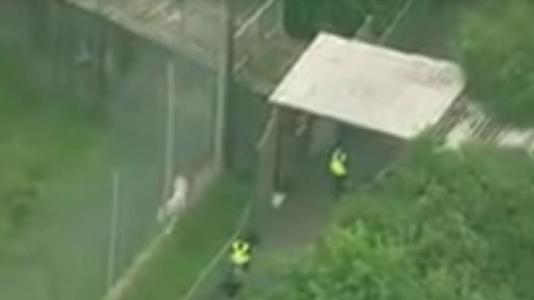 """Reino Unido: Empleada de un zoológico muere en un """"raro incidente"""" con un tigre"""