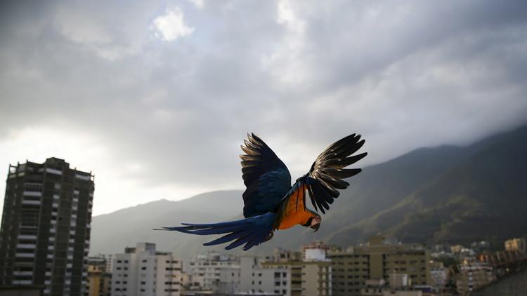 ¿Está acaso Venezuela al borde de una guerra civil?