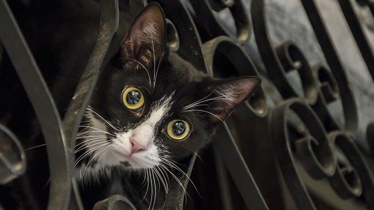 Matanza de animales en Francia: un 'asesino en serie' envenena a más de 200 gatos