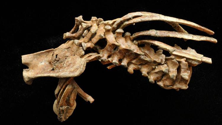 Misterios de la evolución humana: Un niño de 3,3 millones de años tiene mucho para decir (FOTO)