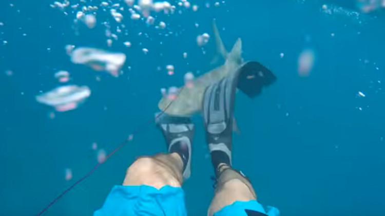 VIDEO: un estadounidense graba cómo le ataca un tiburón