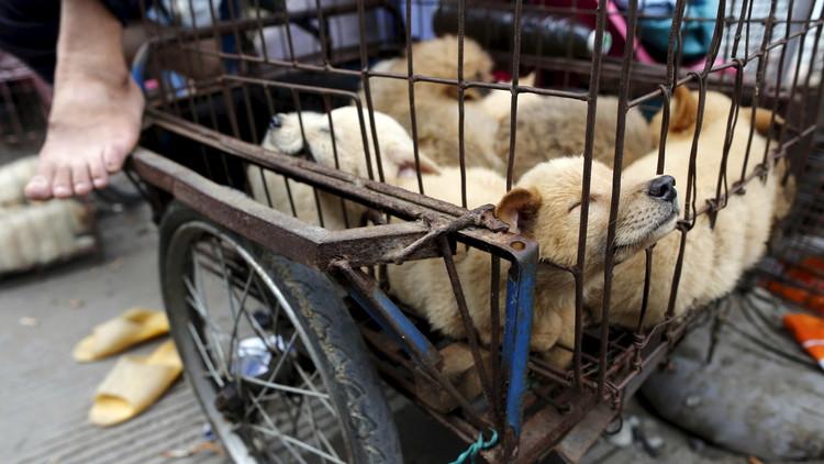 Imágenes fuertes: Un popular restaurante de China vende carne de perro pese a la prohibición