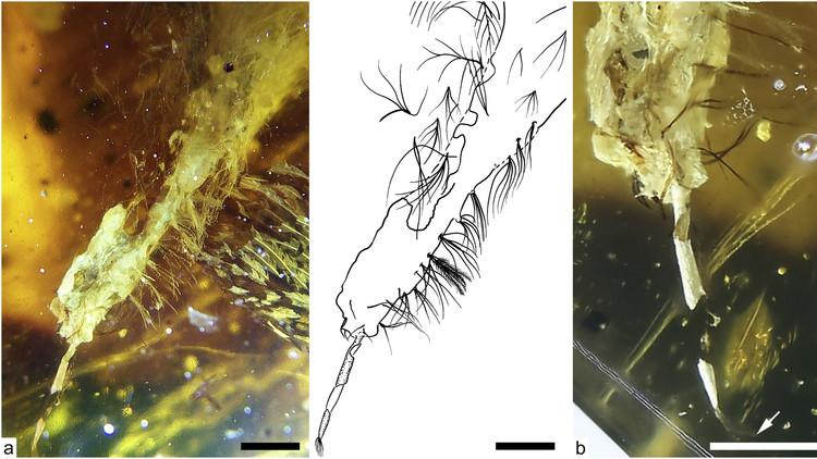 FOTOS: Descubren una cría de ave fosilizada en ámbar con casi 100 millones de años