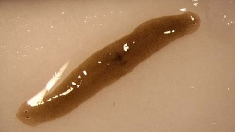 FOTOS: A un gusano enviado al espacio le salen dos cabezas