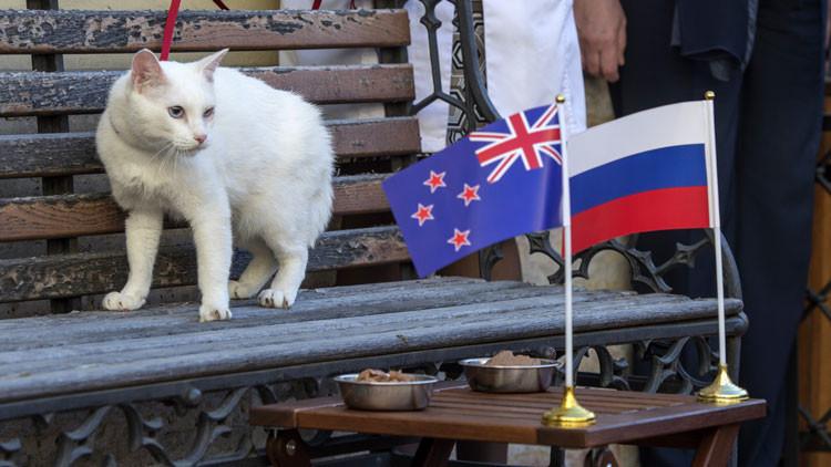 Copa Confederaciones: El gato adivino del torneo apuesta por la victoria de Rusia ante Nueva Zelanda