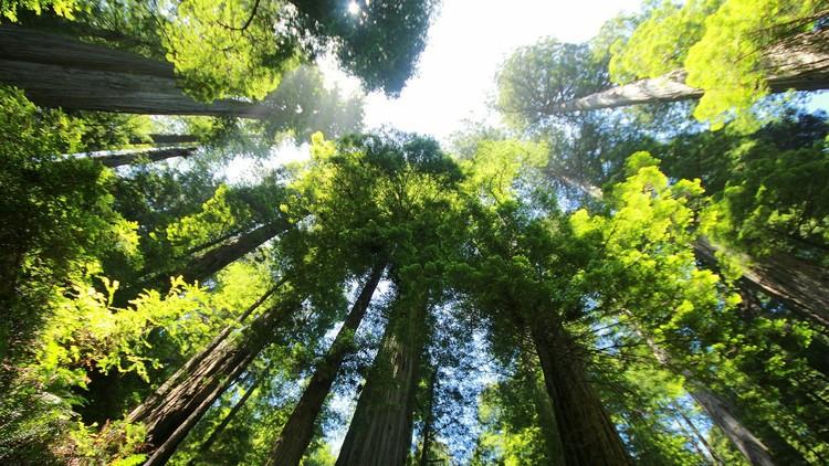 Las autoridades cortan su árbol favorito, lo multan, y él decide vengarse de la manera más cruel