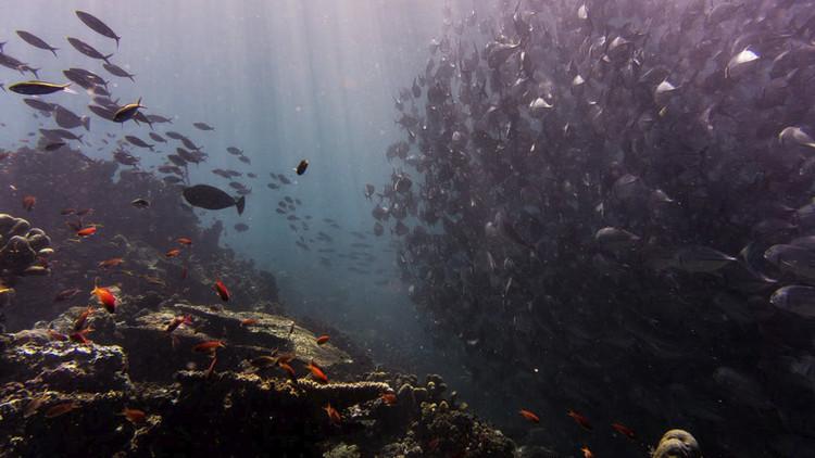 Hallan estos espeluznantes 'monstruos' en el fondo marino australiano (VIDEO)