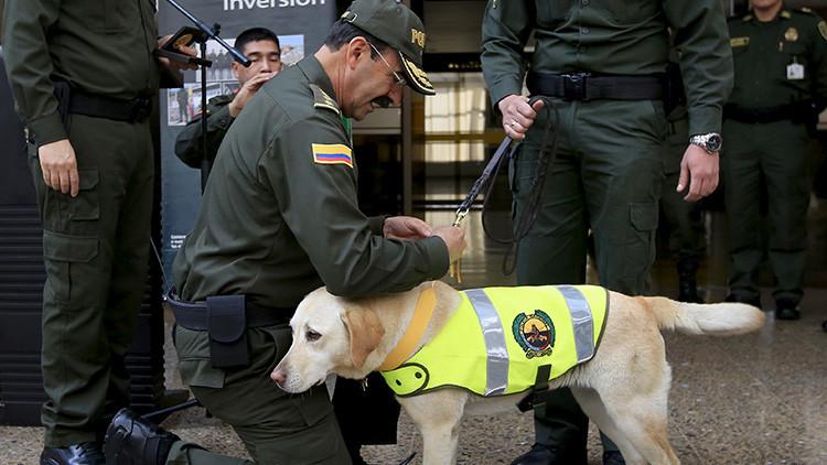 'Gato encerrado': Reacción de perro antiexplosivos genera pánico en Colombia