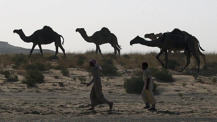 Arabia Saudita expulsa a miles de camellos y ovejas de Catar (FOTOS)