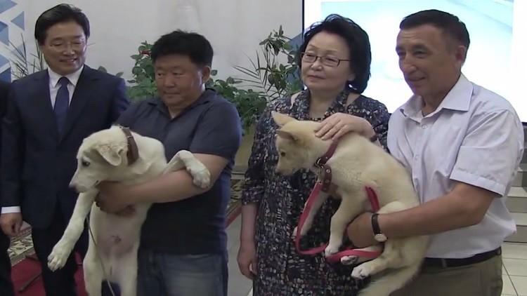 Video: Presentan en Rusia dos cachorros clonados a partir de las orejas de dos perros