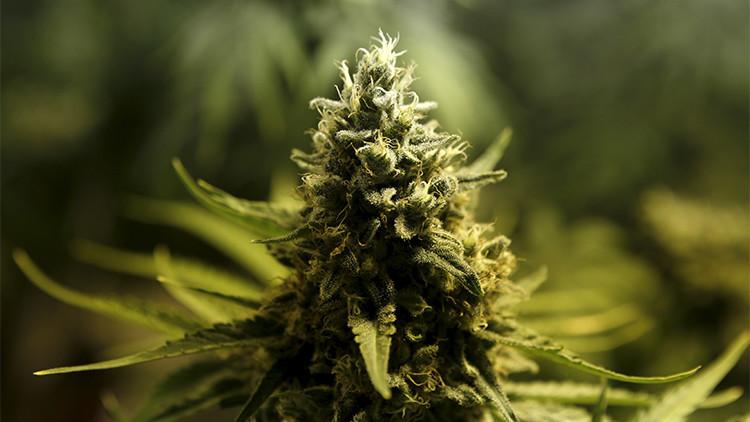 Una empresa de productos derivados de cannabis abrirá su primera oficina en México