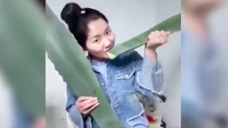 VIDEO: Come una planta durante una transmisión en vivo y descubre que es venenosa