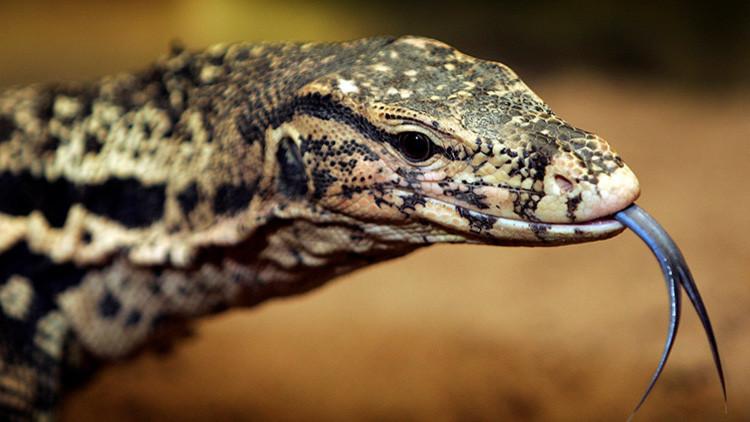 """Misteriosa muerte de una turista belga """"devorada por lagartos"""" en Tailandia"""