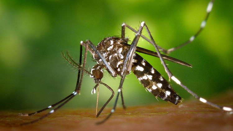 Amenaza mortal: un incurable virus tropical se dirige hacia Europa y EE.UU.