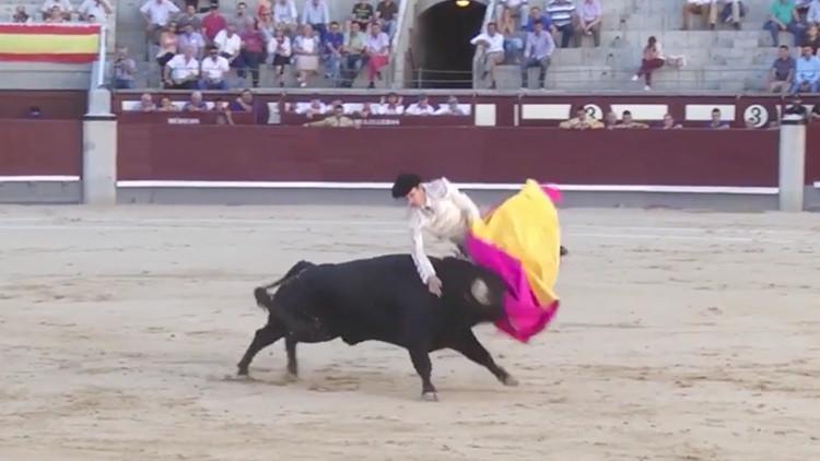 FUERTE VIDEO: Un toro furioso cornea a un torero en el escroto y hiere de gravedad a otro