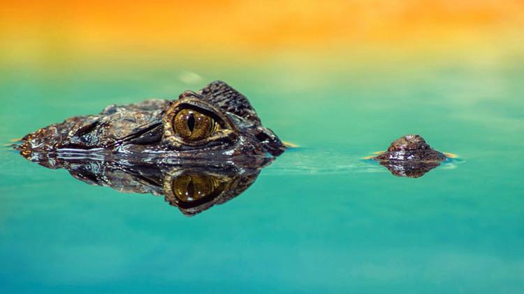 Revelan qué animal era la mayor amenaza para los dinosaurios del Jurásico