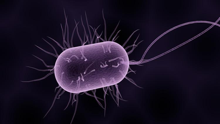 """""""Especialmente inteligente"""": advierten sobre la propagación inminente de la superbacteria gonorrea"""