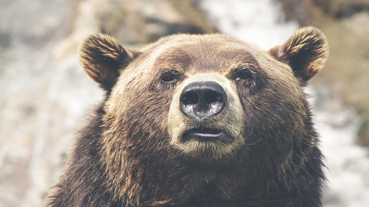 FOTO: Un oso se convierte en 'prisionero' en una cárcel de EE.UU.