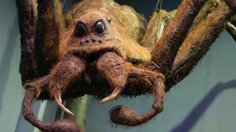 Encuentran una tarántula similar a Aragog, la araña del Bosque Prohibido de 'Harry Potter'