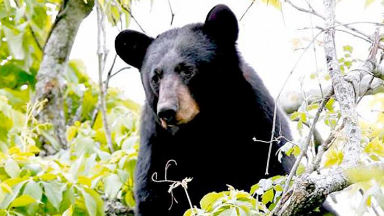 FOTOS: Un estadounidense se despierta al oír el crujido de su cabeza siendo mordida por un oso