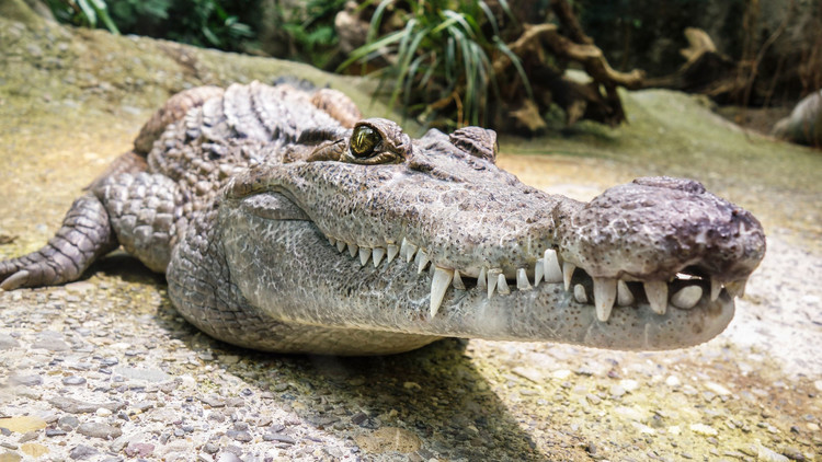 Un cocodrilo ataca a un empleado en la piscina de un complejo turístico en México