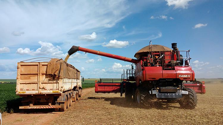 Brasil desbancará a EE.UU. como primer productor mundial de un popular cultivo