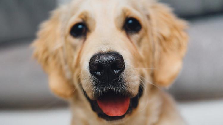 """""""¿Lo llevaríais al veterinario?"""": Las redes celebran la aparición de un perro en un pedazo de madera"""