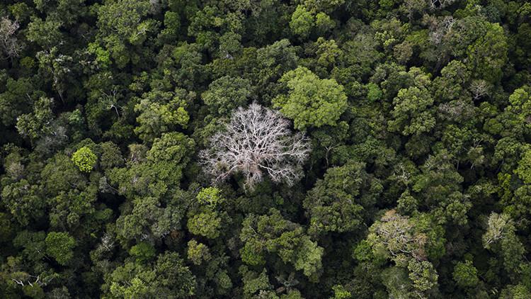 Brasil abrirá 350.000 hectáreas de selva amazónica protegida a la tala, la minería y la agricultura
