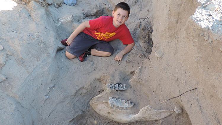 Un niño halla el cráneo de un antepasado del elefante de un millón de años de antigüedad (fotos)
