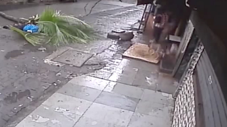 Una famosa presentadora de la India muere luego de ser aplastada por una palmera (FUERTE VIDEO)