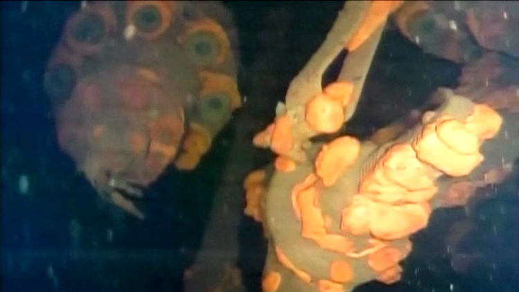 VIDEO: Un robot realiza un importante descubrimiento en la central nuclear de Fukushima