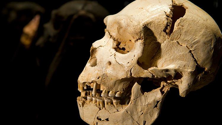 Descubren que nuestros antepasados tuvieron sexo con una especie de homínido 'fantasma'