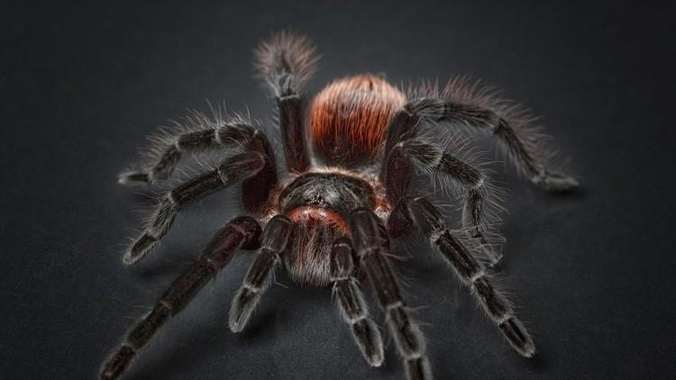 VIDEO: Una enorme araña de película aterra a una pareja en su casa