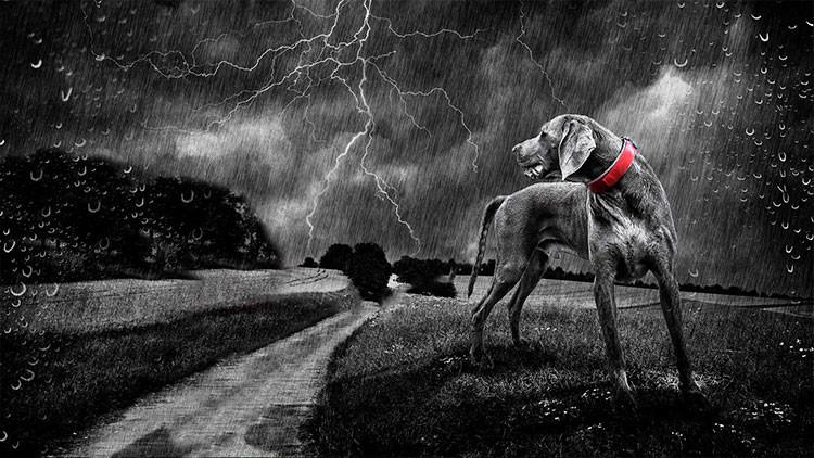 Un perro salva la vida a dos chicas alcanzadas por un rayo