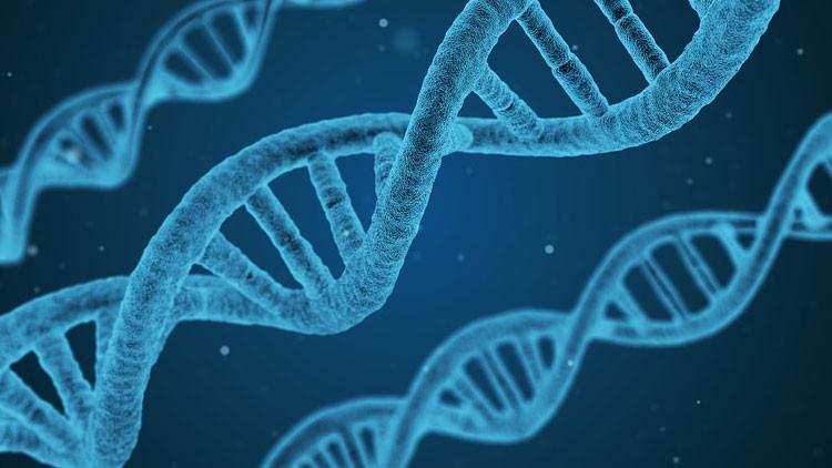 Logran borrar por primera vez una grave enfermedad genética de un embrión humano