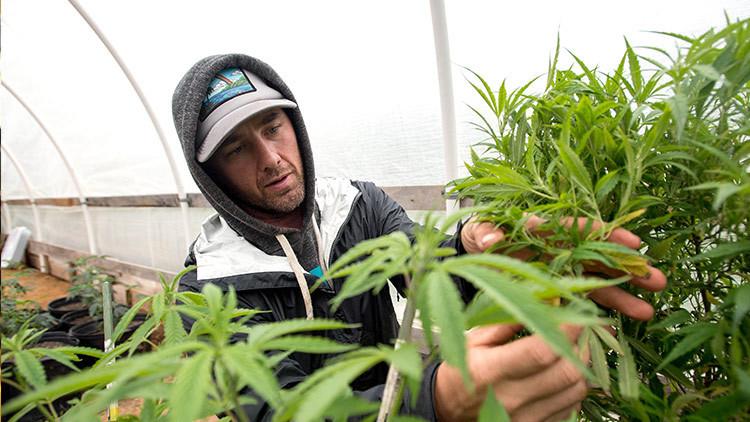 """""""La fiebre verde"""": Compran una localidad entera en California para dedicarla al turismo de cannabis"""