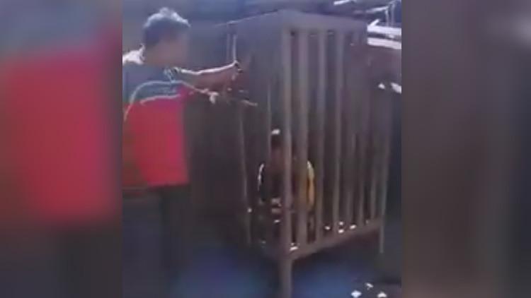 Unos padres encierran a su hijo discapacitado en una jaula durante cuatro años en Argentina (VIDEO)