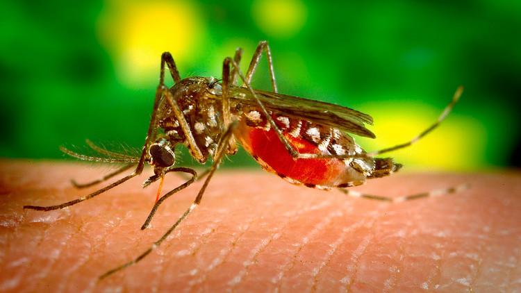 FOTO: Amputan tres extremidades a una mujer en Alemania por la picadura de un mosquito