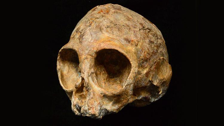 Hallan un cráneo de 13 millones de años que completa eslabones perdidos de la evolución humana