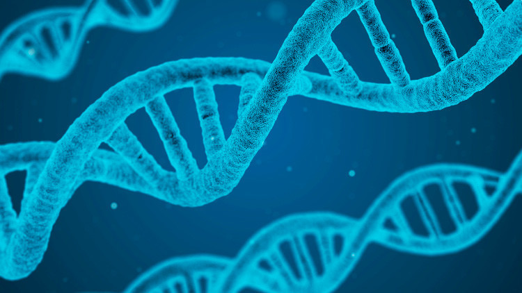 Cerdos modificados genéticamente podrían ser donantes de órganos para humanos