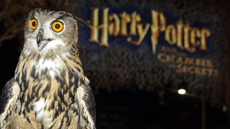 Los búhos de Asia, ¿en jaque por la obsesión con 'Harry Potter'?