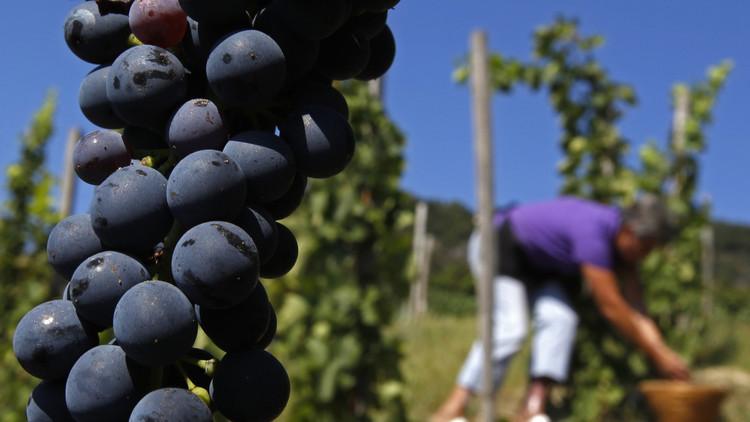 Así afecta el cambio climático la calidad del vino