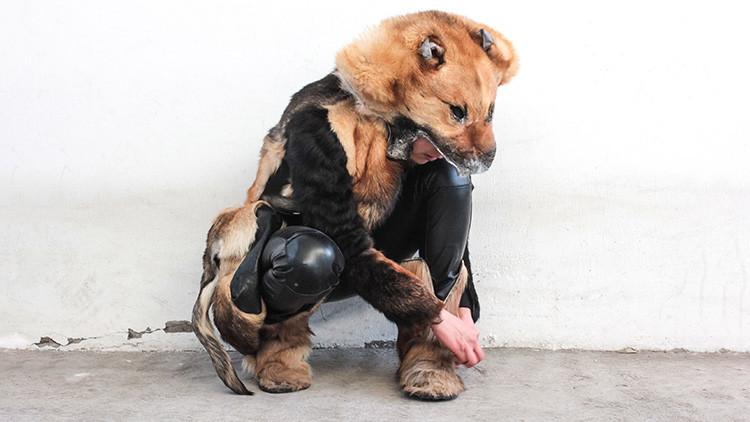 Artista mexicana recoge perros muertos y los convierte en arte para reflexionar sobre la vida animal