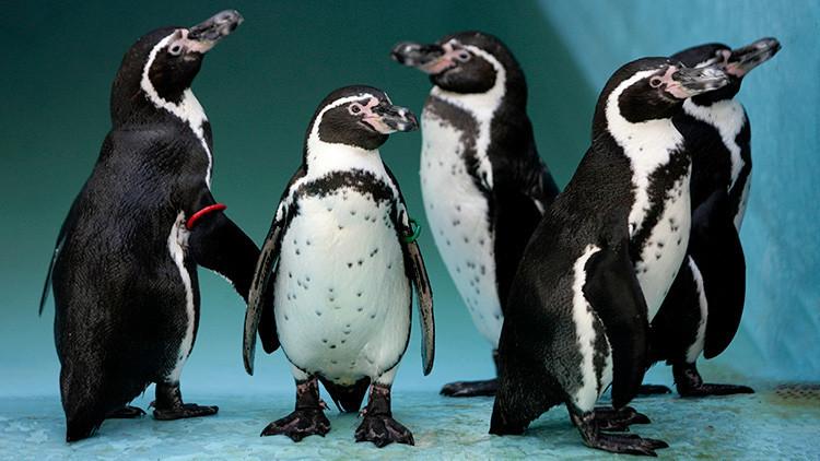 Chile cancela un megaproyecto minero multimillonario por los pingüinos