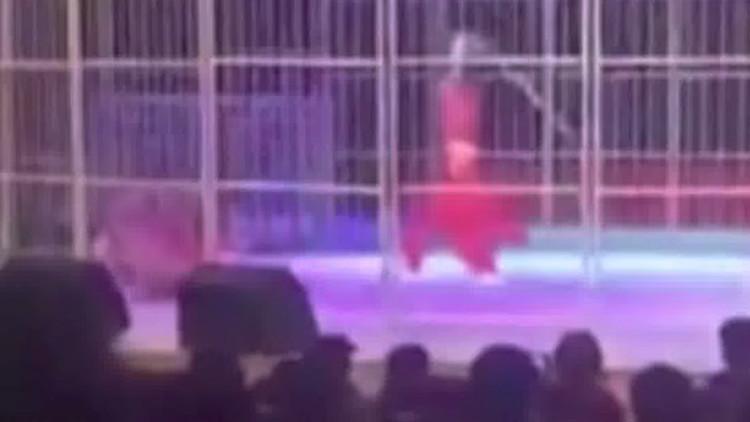 FUERTES IMÁGENES: Un tigre ataca al entrenador frente a espectadores horrorizados